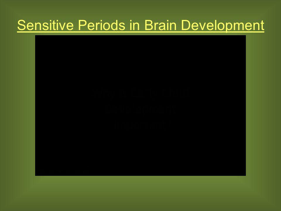 Sensitive Periods in Brain Development