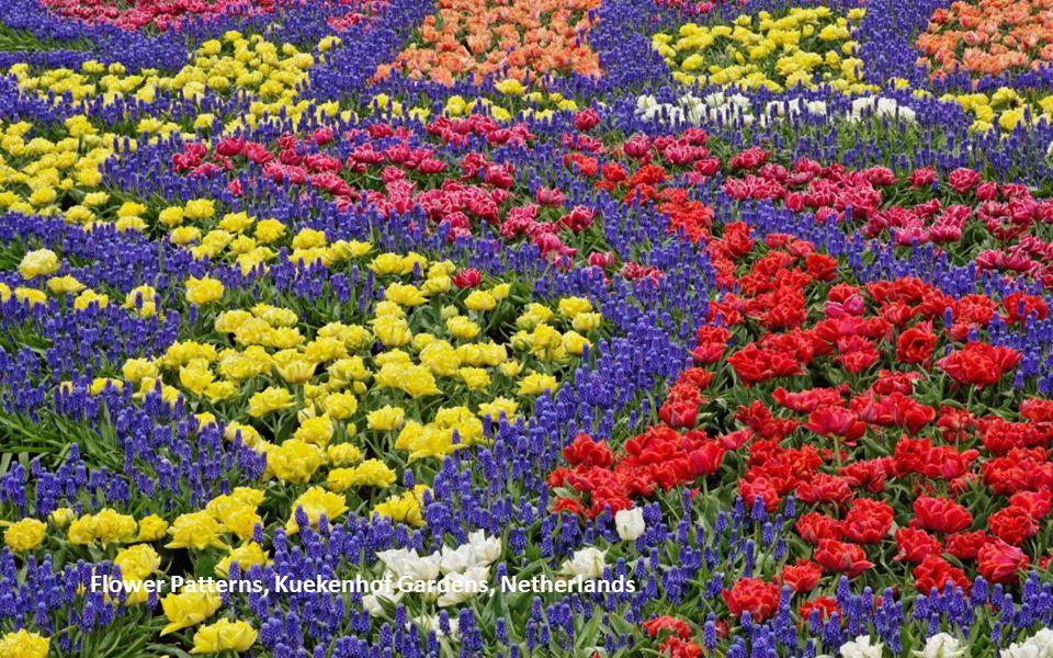 Flower Arrangement, Amsterdam, The Netherlands