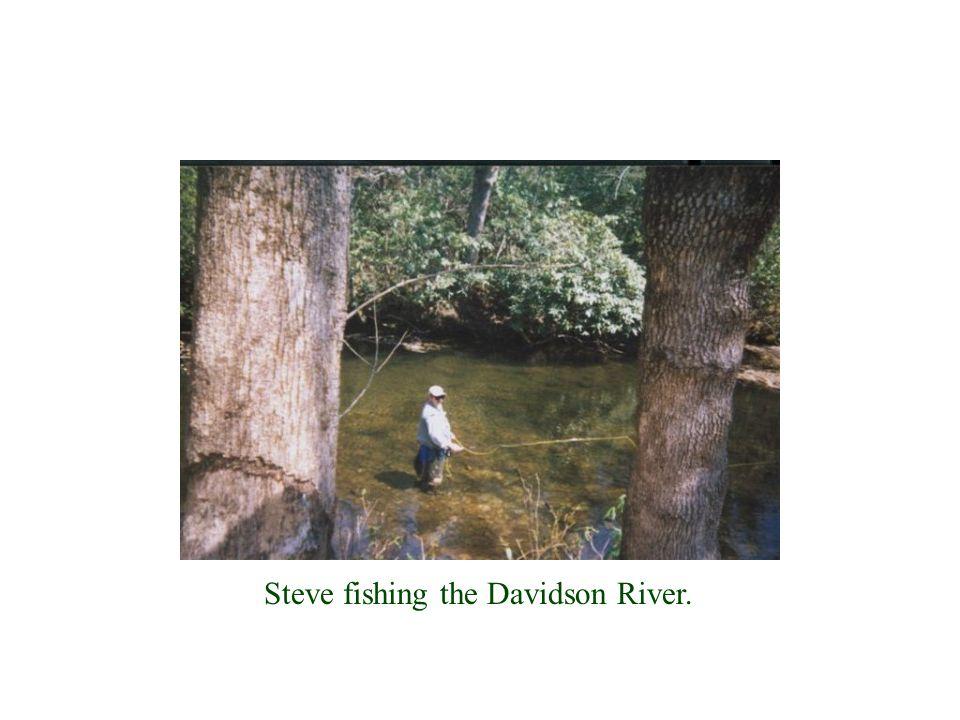Steve fishing the Davidson River.