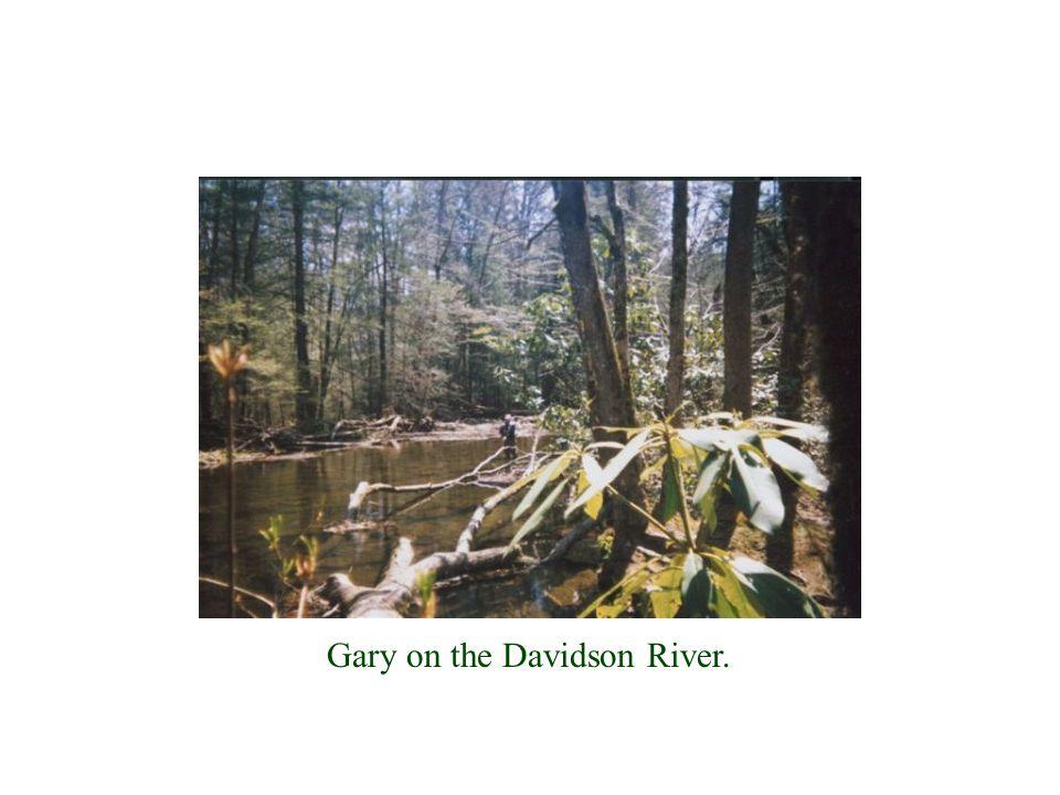Gary on the Davidson River.
