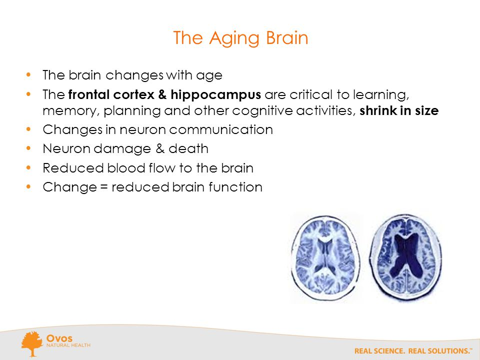 The Aging Brain The brain changes with age The frontal cortex & hippocampus are critical to learning, memory, planning and other cognitive activities, shrink in size Changes in neuron communication Neuron damage & death Reduced blood flow to the brain Change = reduced brain function