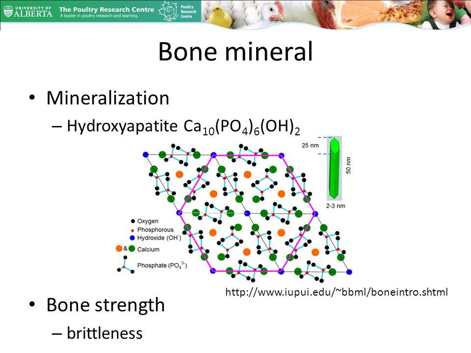 Bone mineral Mineralization – Hydroxyapatite Ca 10 (PO 4 ) 6 (OH) 2 Bone strength – brittleness http://www.iupui.edu/~bbml/boneintro.shtml
