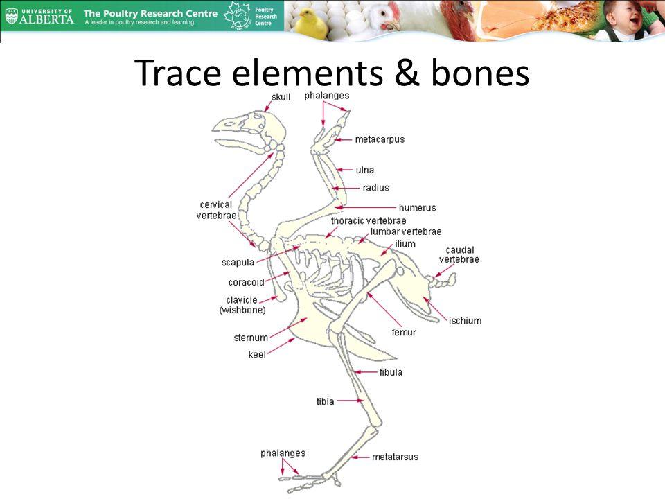 Trace elements & bones
