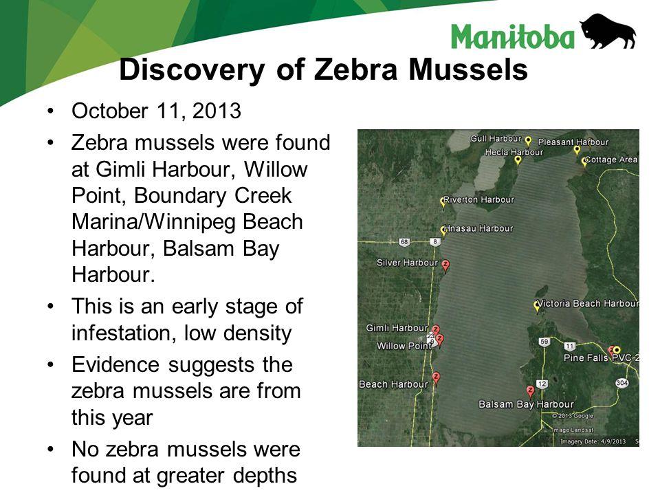 Manitoba Water Stewardship Manitoba Water Stewardship - Lake Winnipeg October 11, 2013 Zebra mussels were found at Gimli Harbour, Willow Point, Boundary Creek Marina/Winnipeg Beach Harbour, Balsam Bay Harbour.
