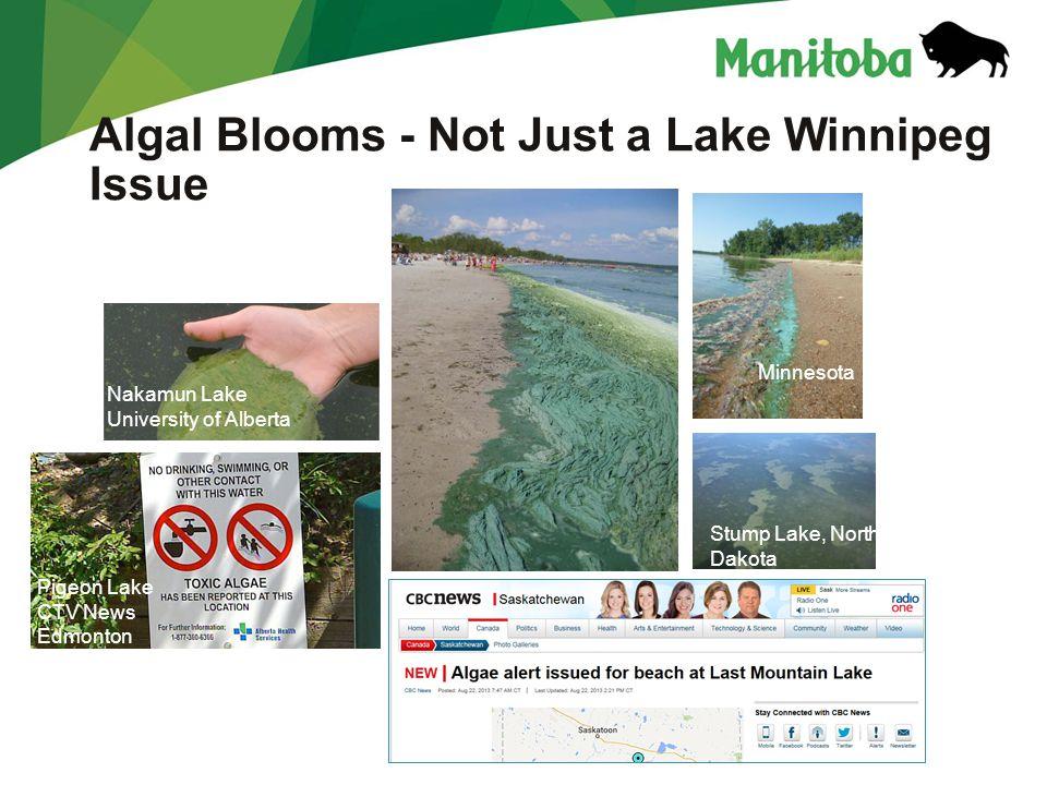 Manitoba Water Stewardship Manitoba Water Stewardship - Lake Winnipeg Algal Blooms - Not Just a Lake Winnipeg Issue Pigeon Lake CTV News Edmonton Naka