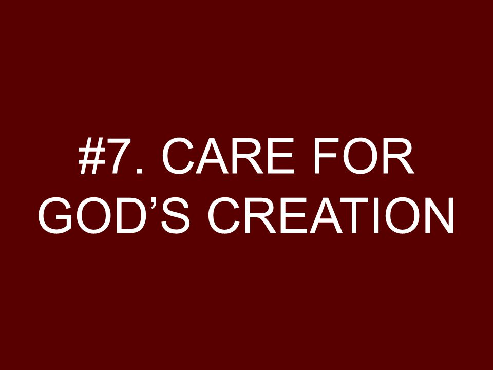 #7. CARE FOR GOD'S CREATION