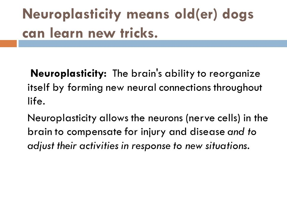 Neuroplasticity means old(er) dogs can learn new tricks. Neuroplasticity: The brain's ability to reorganize itself by forming new neural connections t