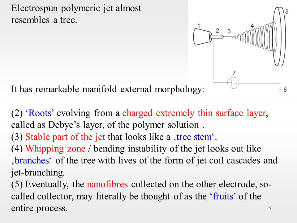 5 It has remarkable manifold external morphology: (2) 'Roots' evolving from a charged extremely thin surface layer, called as Debye's layer, of the po