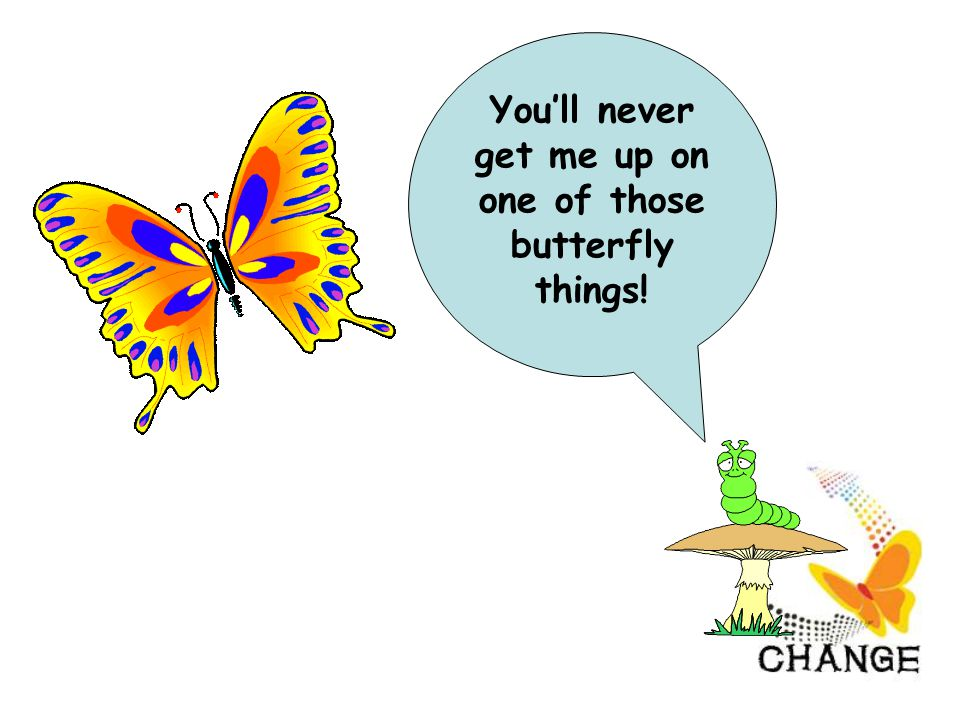 You'll never get me up on one of those butterfly things!