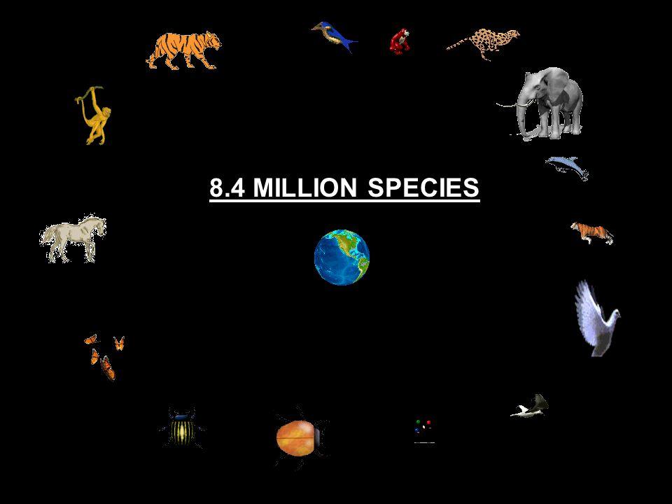 8.4 MILLION SPECIES