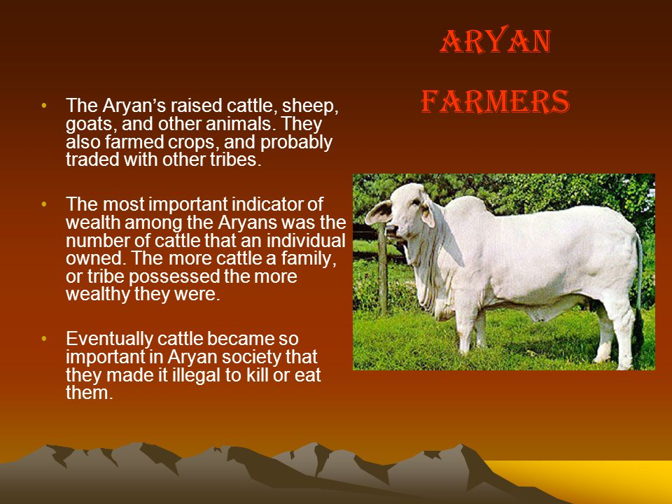 The Aryan's raised cattle, sheep, goats, and other animals.