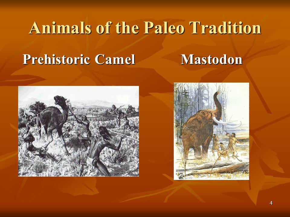 Animals of the Paleo Tradition Prehistoric Camel Mastodon 4