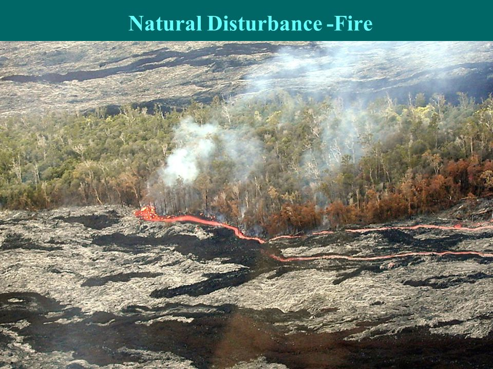 Natural Disturbance -Fire