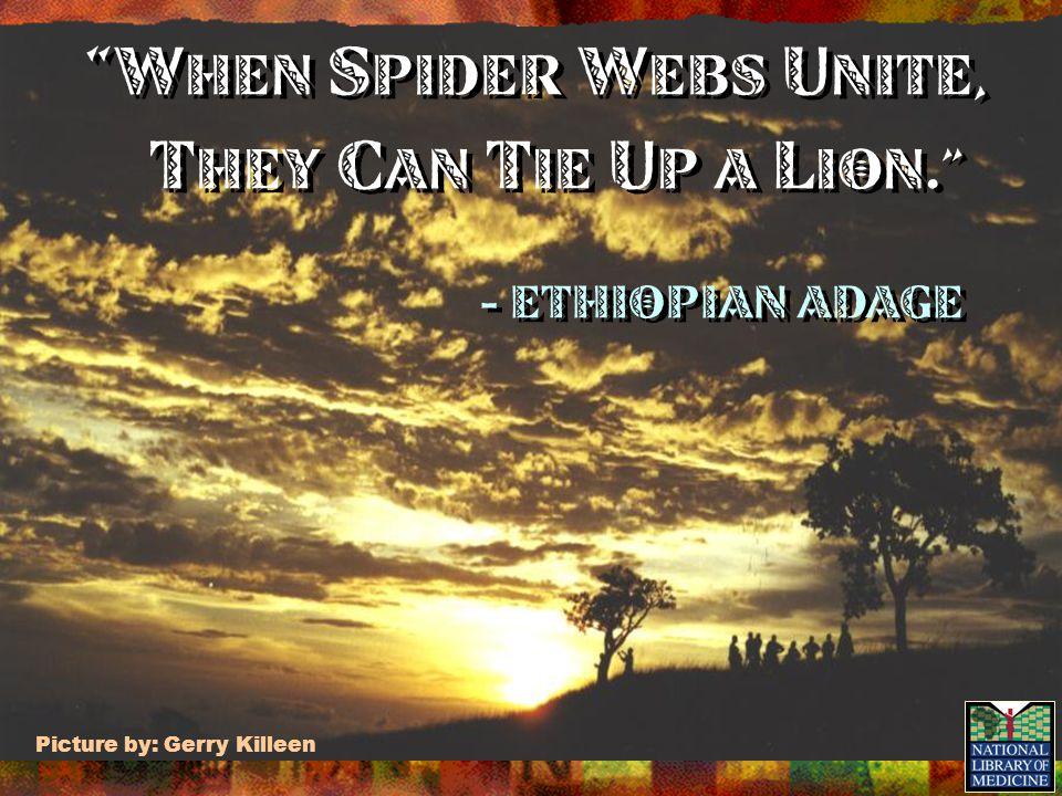 W hen s pider w ebs u nite, t hey c an t ie u p a l ion. - Ethiopian adage W hen s pider w ebs u nite, t hey c an t ie u p a l ion. - Ethiopian adage Picture by: Gerry Killeen