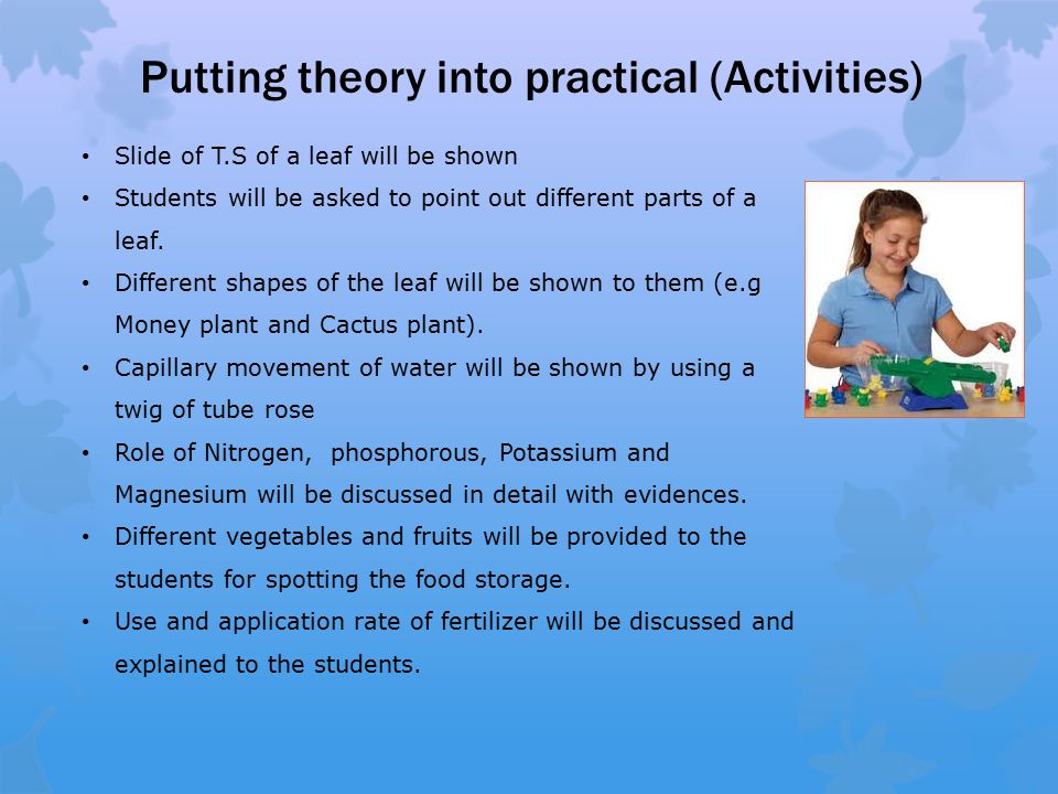 Putting theory into practical (Activities) Slide of T.S of a leaf will be shown Students will be asked to point out different parts of a leaf.