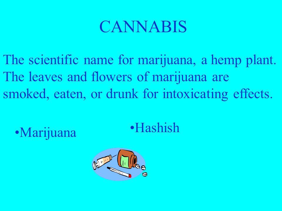 OTHER DANGEROUS DRUGS Marijuana Designer and Look-Alike Drugs Inhalants Anabolic Steroids