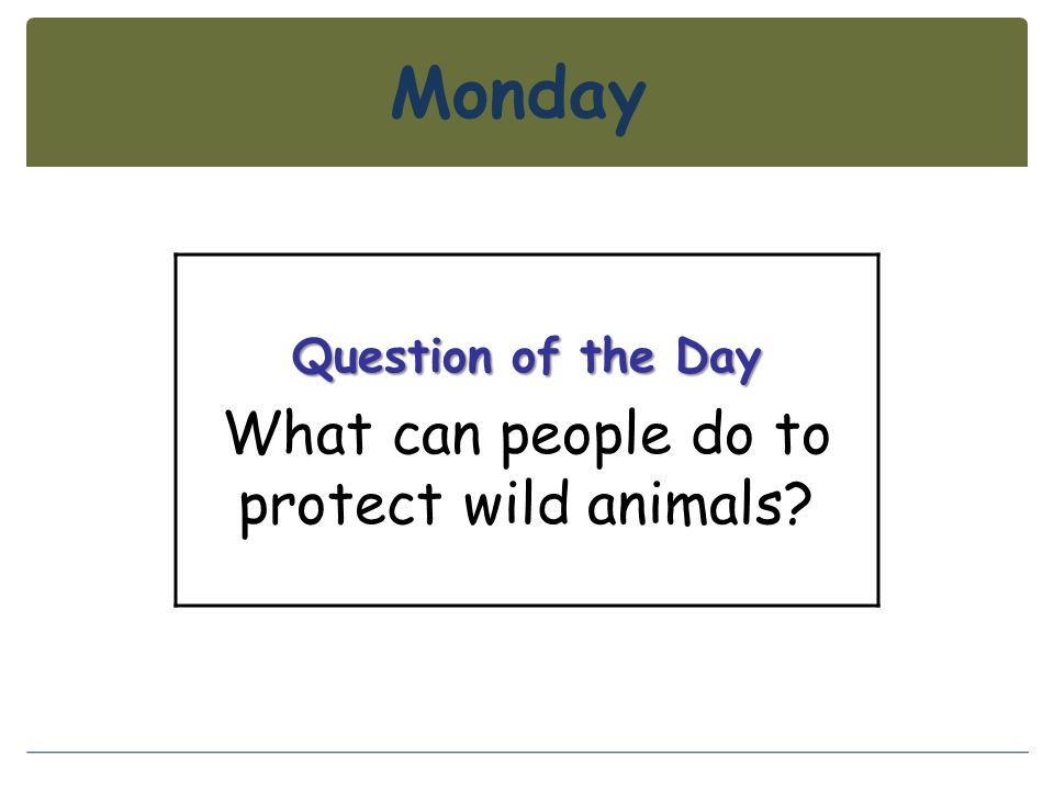 Monday Question of the Day What can people do to protect wild animals?