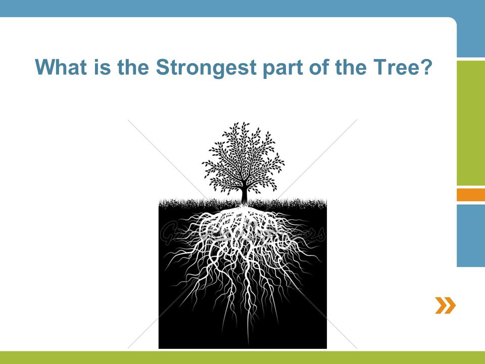 What is the Strongest part of the Tree?