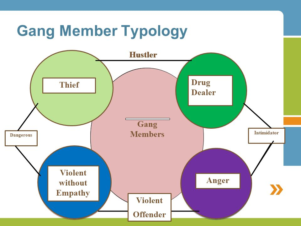 Gang Member Typology Gang Members Murderous Behavior Jackers Gang Members Drug Dealers Violent Behavior Intimidator Dangerous Hustler Gang Members Violent without Empathy Thief Gang Members Drug Dealer Anger Intimidator Dangerous Violent Offender Hustler