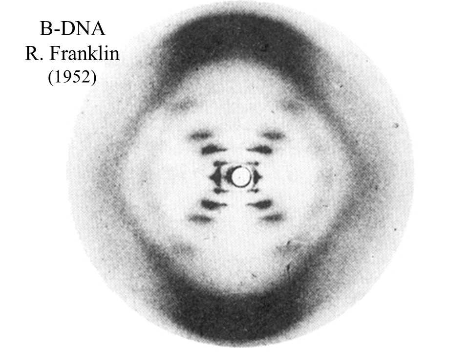 B-DNA R. Franklin (1952)