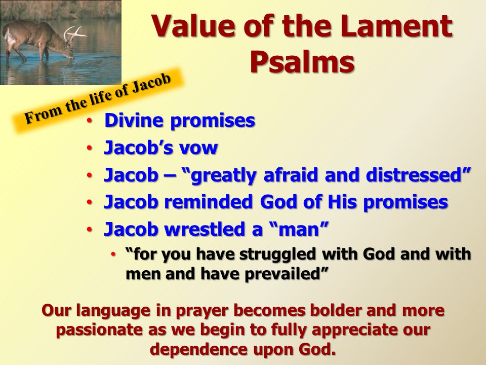 "Value of the Lament Psalms Divine promises Divine promises Jacob's vow Jacob's vow Jacob – ""greatly afraid and distressed"" Jacob – ""greatly afraid and"
