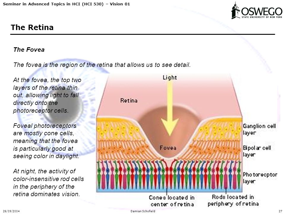 Seminar in Advanced Topics in HCI (HCI 530) – Vision 01 26/09/2004Damian Schofield27 The Retina The Fovea The fovea is the region of the retina that a