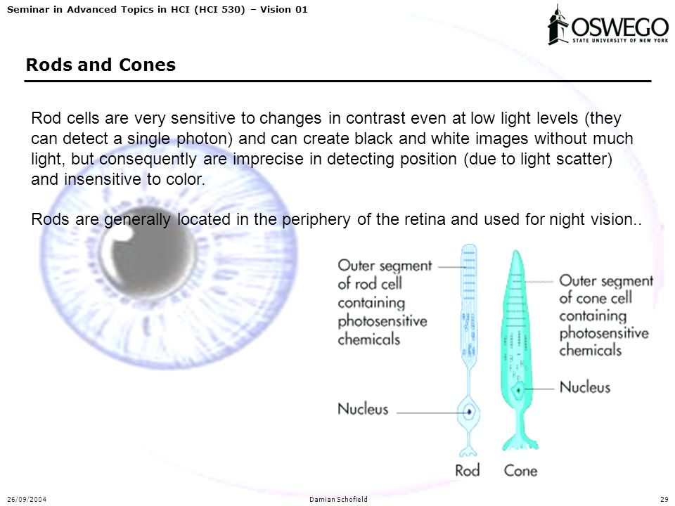 Seminar in Advanced Topics in HCI (HCI 530) – Vision 01 26/09/2004Damian Schofield29 Rods and Cones Rod cells are very sensitive to changes in contras