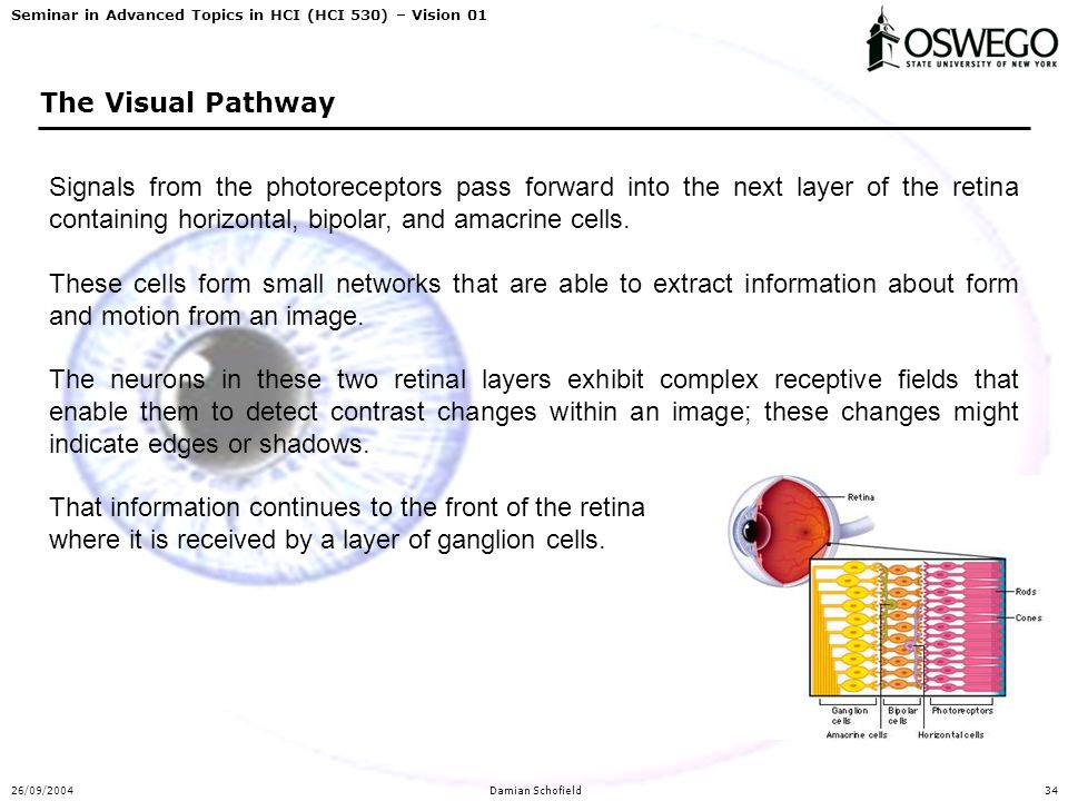 Seminar in Advanced Topics in HCI (HCI 530) – Vision 01 26/09/2004Damian Schofield34 The Visual Pathway Signals from the photoreceptors pass forward i