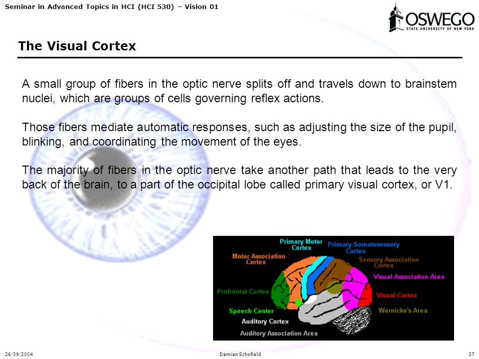 Seminar in Advanced Topics in HCI (HCI 530) – Vision 01 26/09/2004Damian Schofield37 The Visual Cortex A small group of fibers in the optic nerve spli