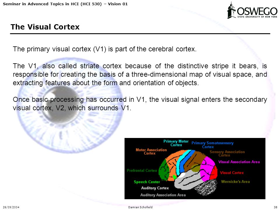 Seminar in Advanced Topics in HCI (HCI 530) – Vision 01 26/09/2004Damian Schofield38 The Visual Cortex The primary visual cortex (V1) is part of the c