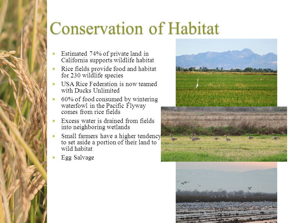 Conservation of Habitat Estimated 74% of private land in California supports wildlife habitat Rice fields provide food and habitat for 230 wildlife sp