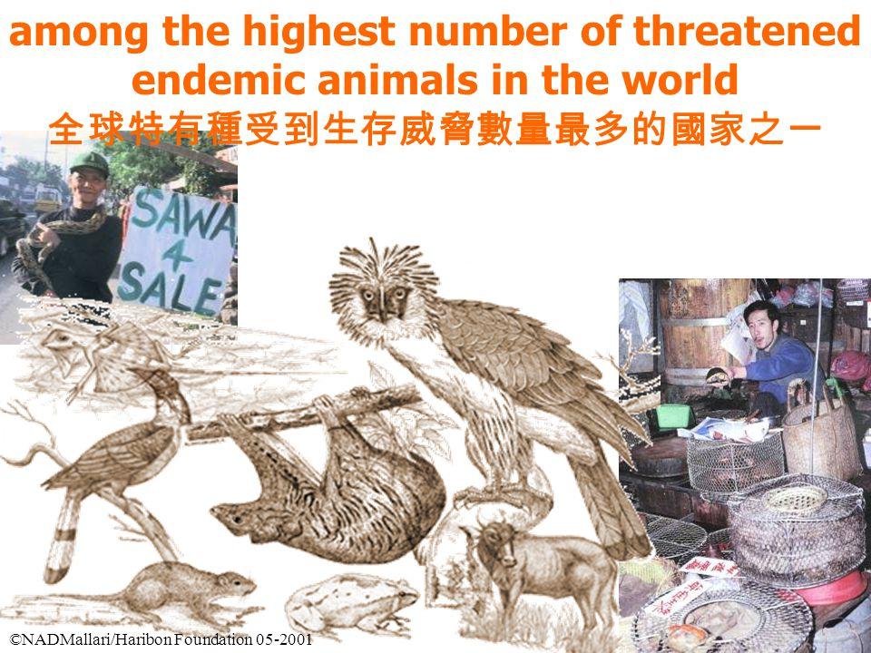 among the highest number of threatened endemic animals in the world 全球特有種受到生存威脅數量最多的國家之一 ©NADMallari/Haribon Foundation 05-2001