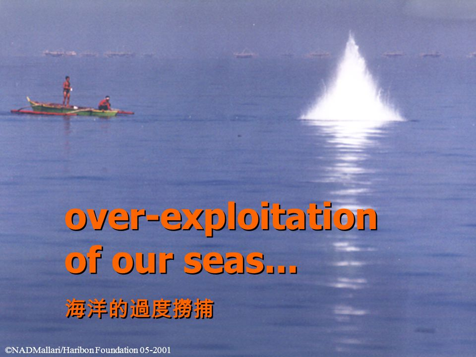 over-exploitation of our seas... 海洋的過度撈捕 over-exploitation of our seas...