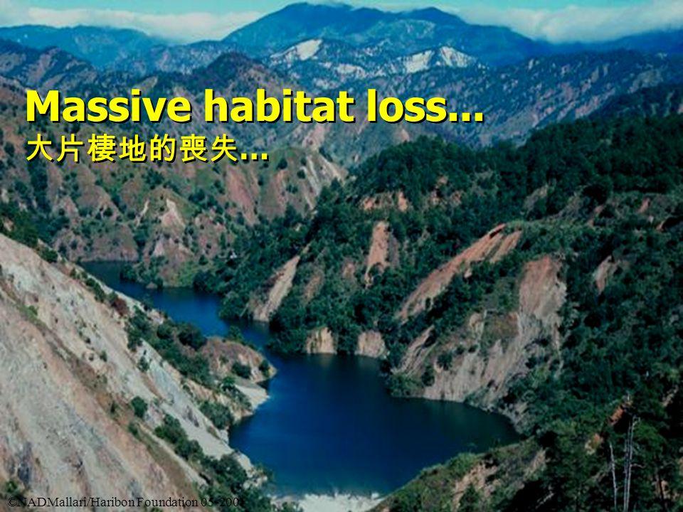 Massive habitat loss... 大片棲地的喪失 … Massive habitat loss...