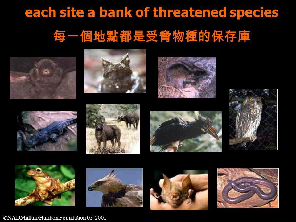 each site a bank of threatened species 每一個地點都是受脅物種的保存庫 ©NADMallari/Haribon Foundation 05-2001