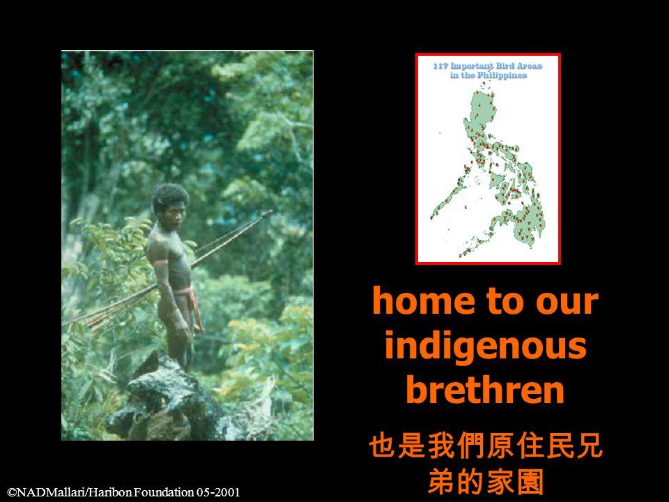 home to our indigenous brethren 也是我們原住民兄 弟的家園 ©NADMallari/Haribon Foundation 05-2001