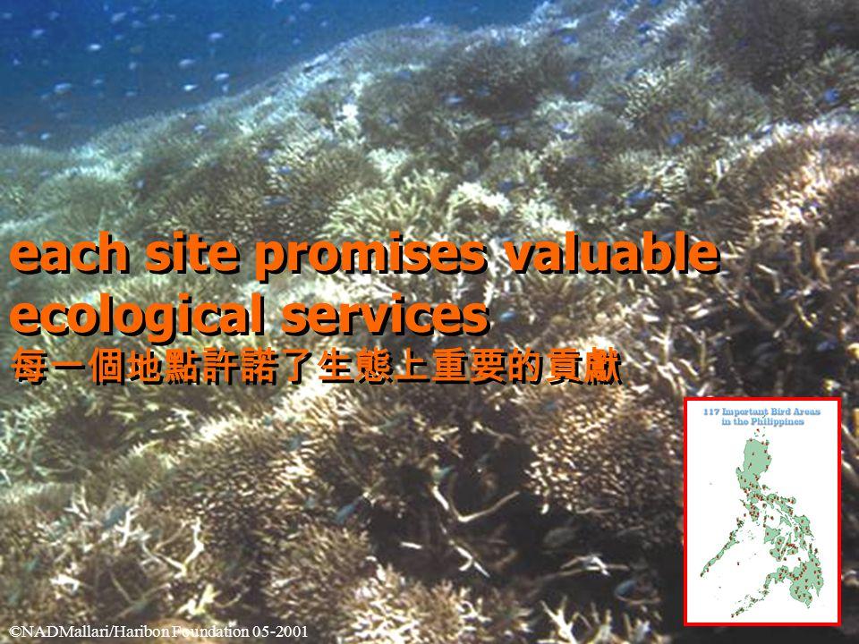 each site promises valuable ecological services 每一個地點許諾了生態上重要的貢獻 each site promises valuable ecological services 每一個地點許諾了生態上重要的貢獻 ©NADMallari/Haribon Foundation 05-2001