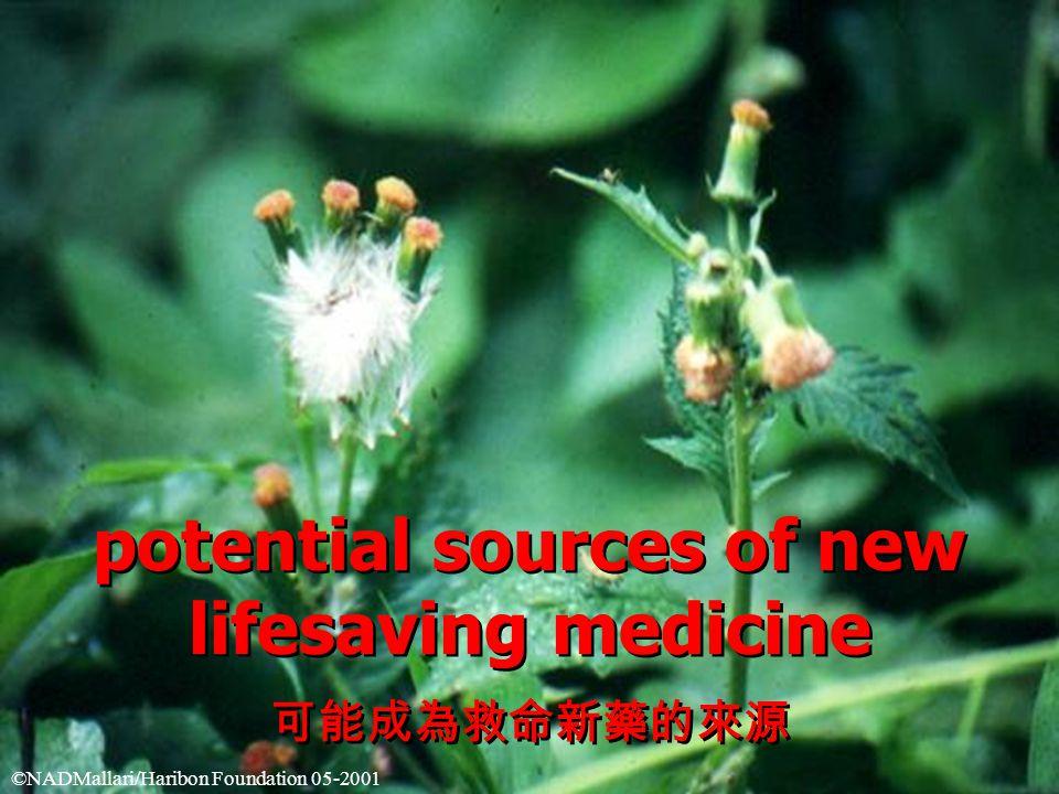 potential sources of new lifesaving medicine 可能成為救命新藥的來源 potential sources of new lifesaving medicine 可能成為救命新藥的來源 ©NADMallari/Haribon Foundation 05-2001