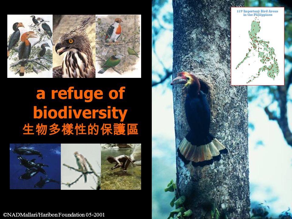 a refuge of biodiversity 生物多樣性的保護區 ©NADMallari/Haribon Foundation 05-2001
