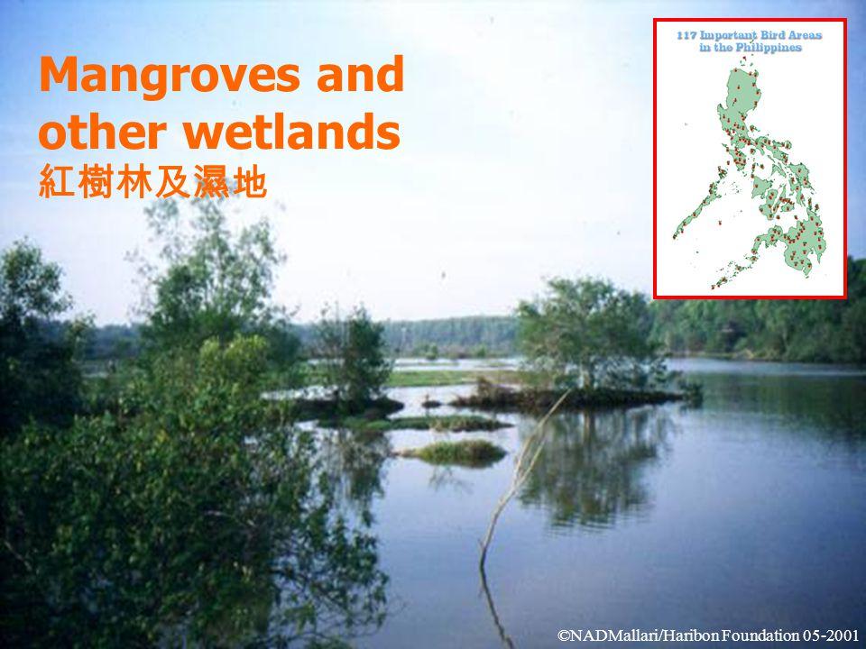 Mangroves and other wetlands 紅樹林及濕地 ©NADMallari/Haribon Foundation 05-2001