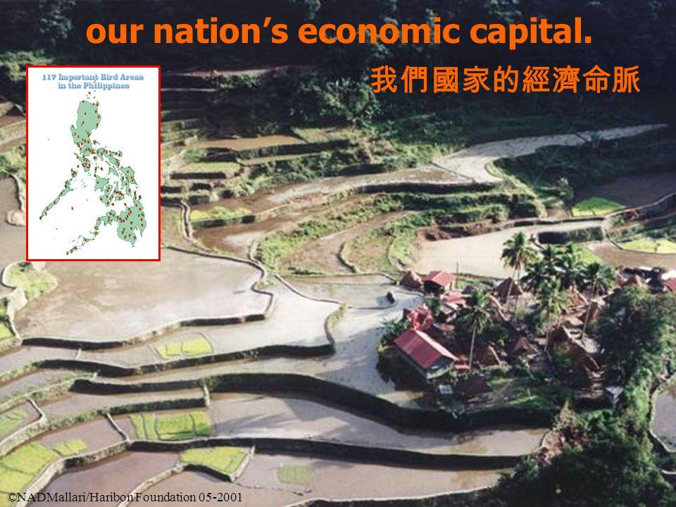 our nation's economic capital. 我們國家的經濟命脈 ©NADMallari/Haribon Foundation 05-2001