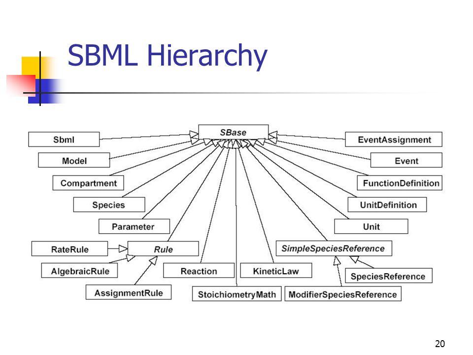 20 SBML Hierarchy