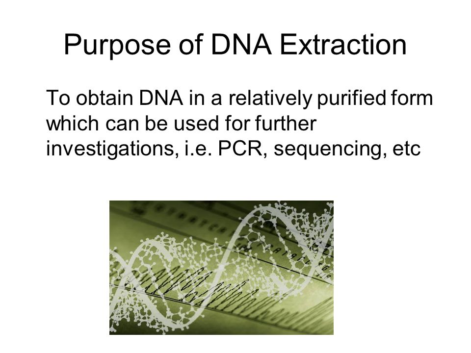 Purpose of DNA Extraction To obtain DNA in a relatively purified form which can be used for further investigations, i.e. PCR, sequencing, etc