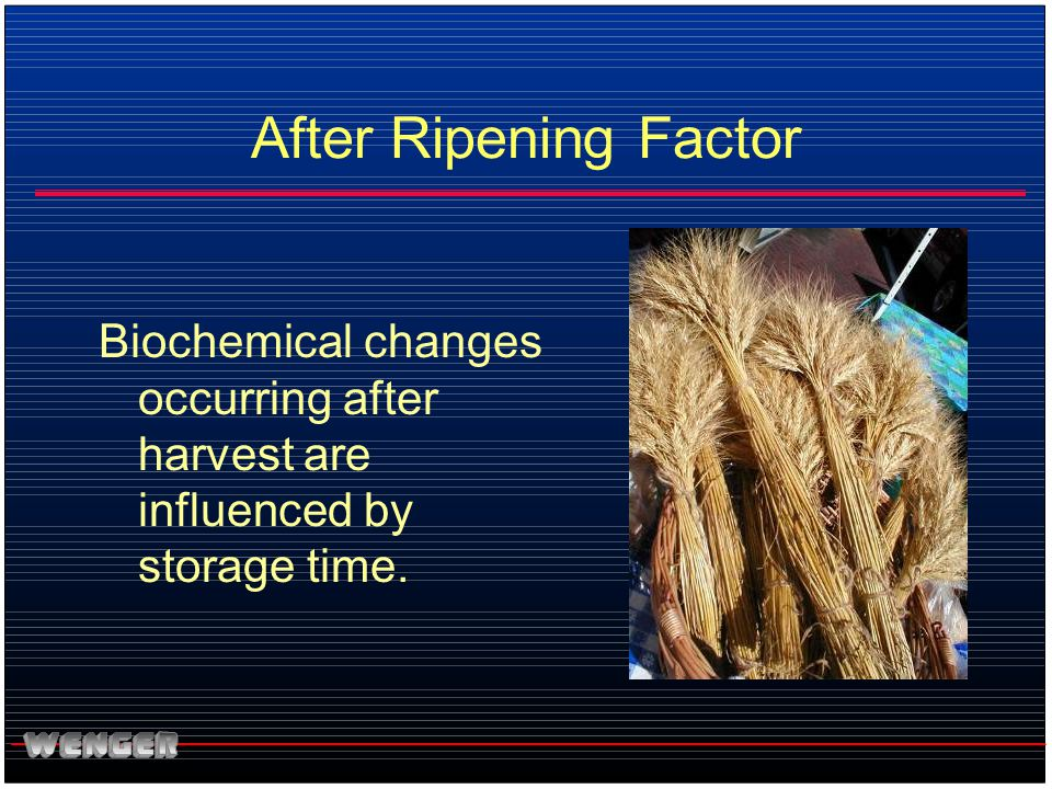 After Ripening Factor Biochemical changes occurring after harvest are influenced by storage time.