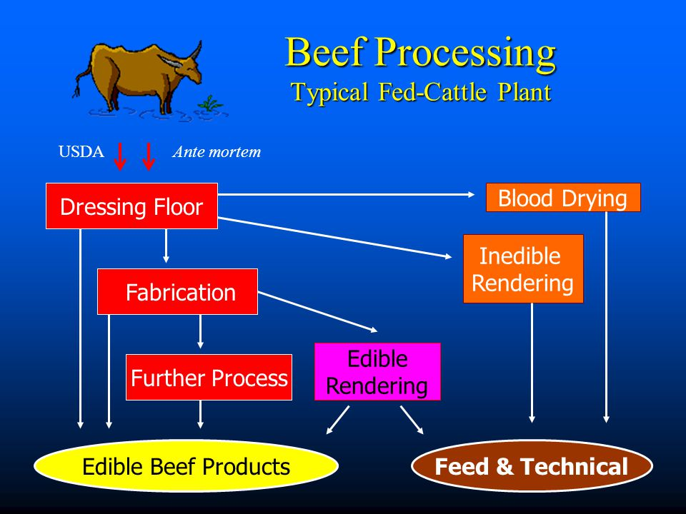 Dressing Floor Fabrication Further Process Edible Beef Products Inedible Rendering Beef Processing Typical Fed-Cattle Plant Blood Drying Edible Render
