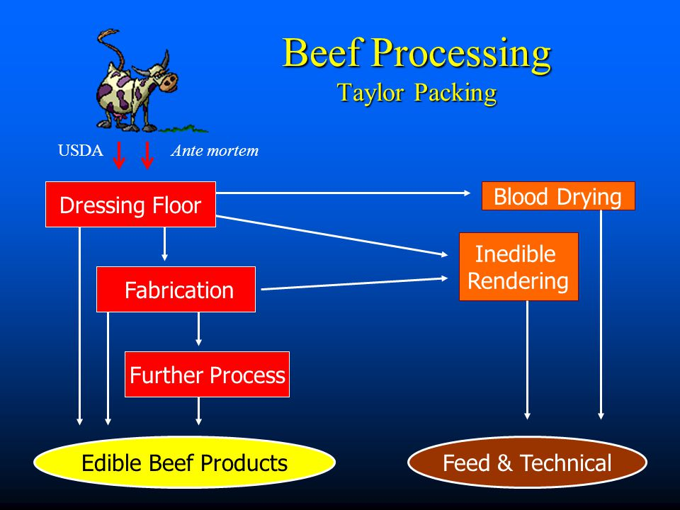 Dressing Floor Fabrication Edible Beef Products Inedible Rendering Beef Processing Taylor Packing Blood Drying Feed & Technical USDA Ante mortem Further Process