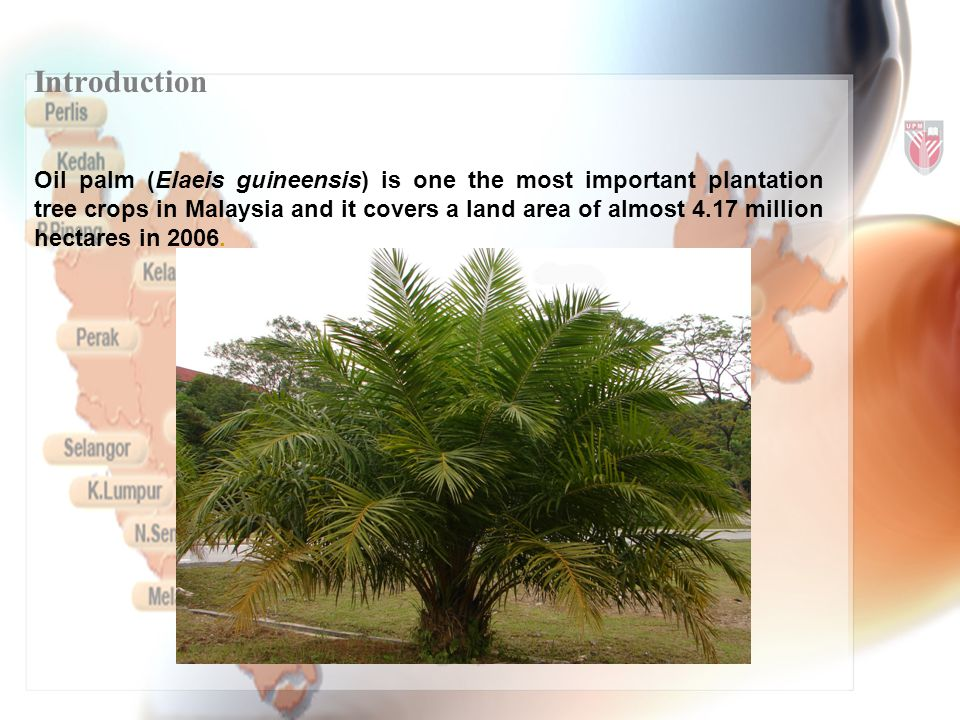 Introduction Oil palm (Elaeis guineensis) is one the most important plantation tree crops in Malaysia and it covers a land area of almost 4.17 million hectares in 2006.