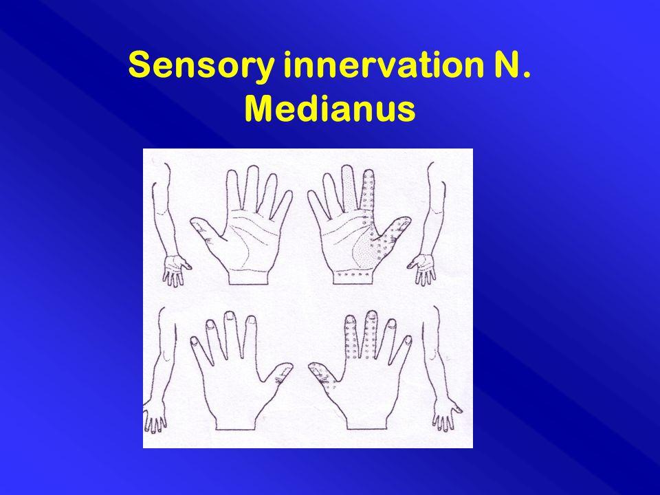 Sensory innervation N. Medianus
