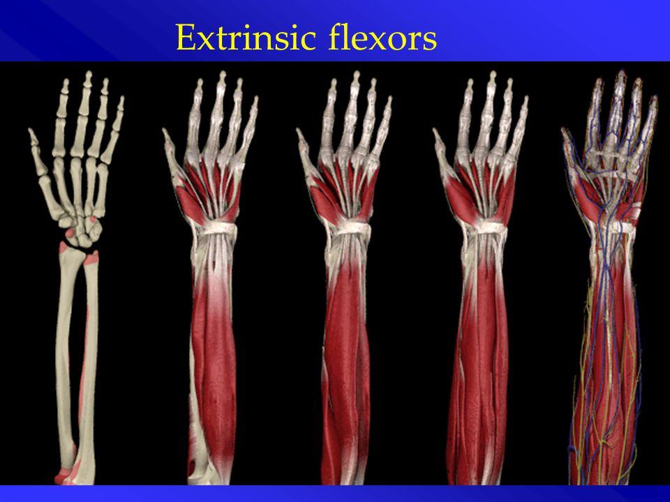 Extrinsic flexors