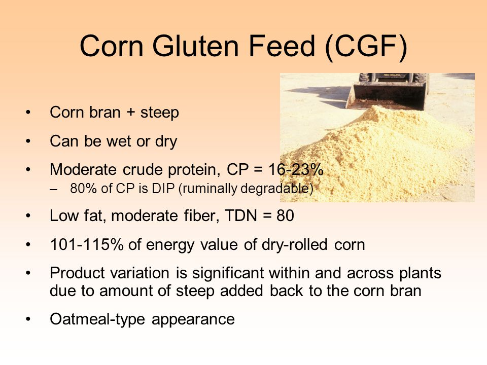 Corn Gluten Feed (CGF) Corn bran + steep Can be wet or dry Moderate crude protein, CP = 16-23% –80% of CP is DIP (ruminally degradable) Low fat, moder